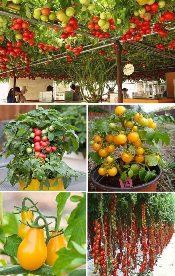 Kinh nghiệm trồng quả