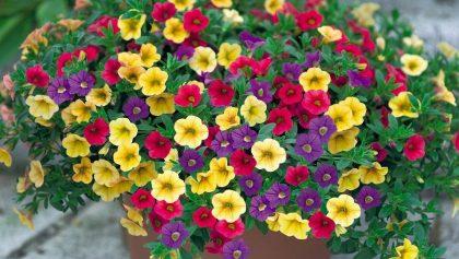 Những hoa củ quả tươi ngon được gieo trồng từ hạt giống nhỏ bé