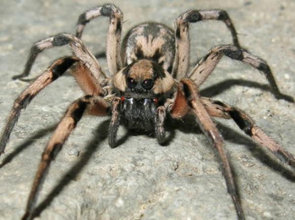 Nằm mơ thấy con nhện có ý nghĩa gì đặc biệt?