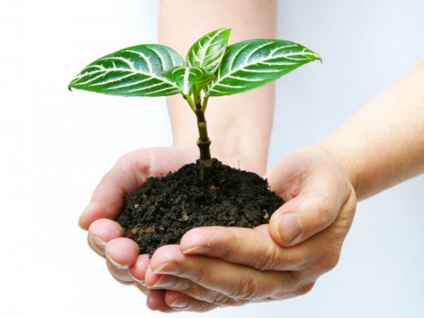 Chiêm bao thấy trồng cây có ý nghĩa gì đặc biệt