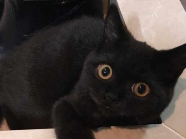 Mơ thấy mèo đen là điềm báo tốt hay xấu?